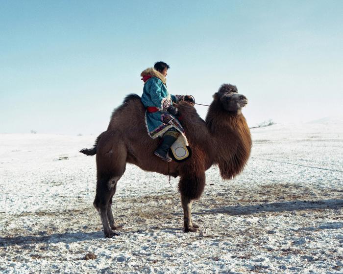 "Li Wei, ""Camel Rider"", 2010"