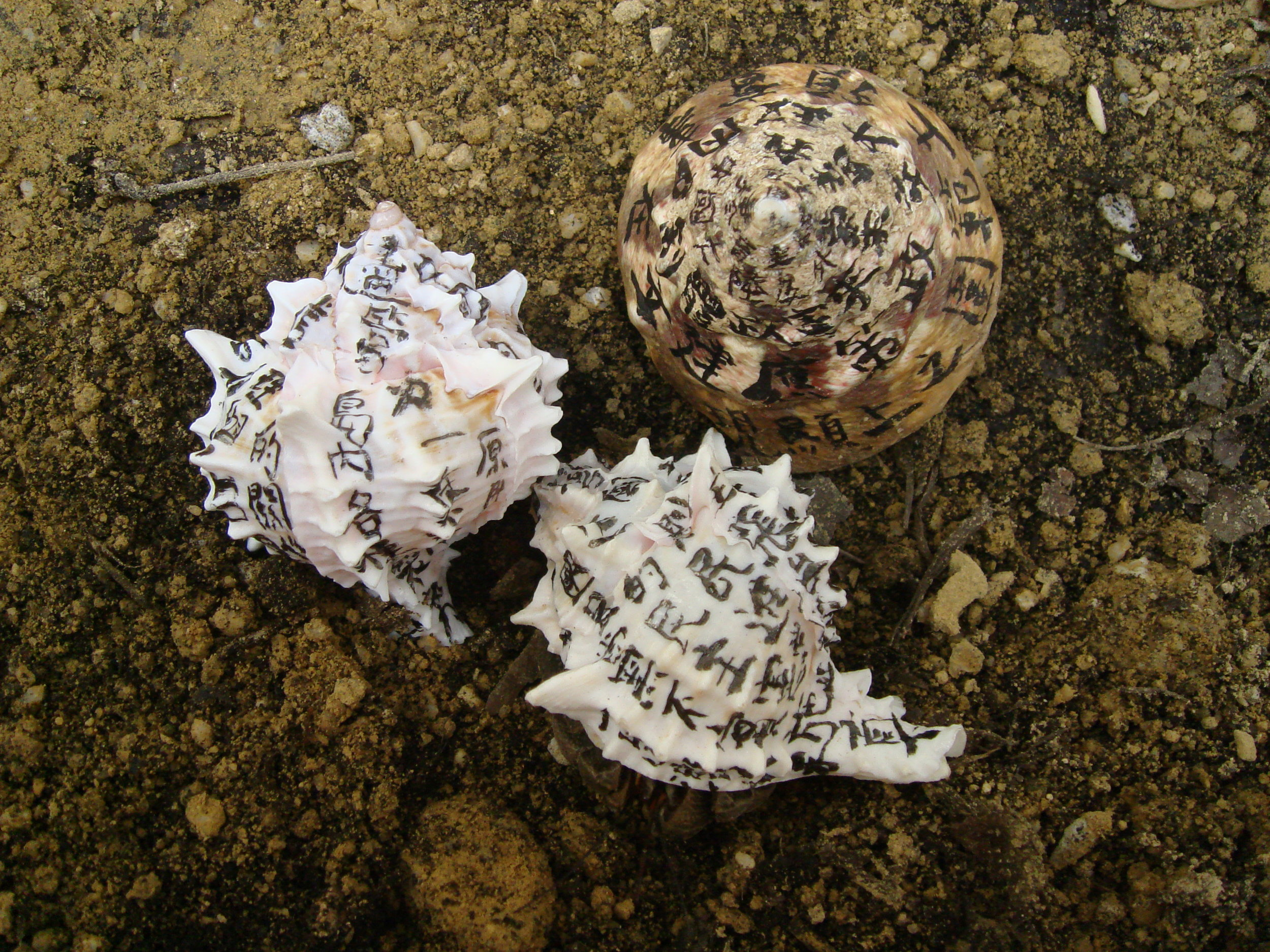 2008, Hermit Crab 01, Photograph, 66 x 88cm