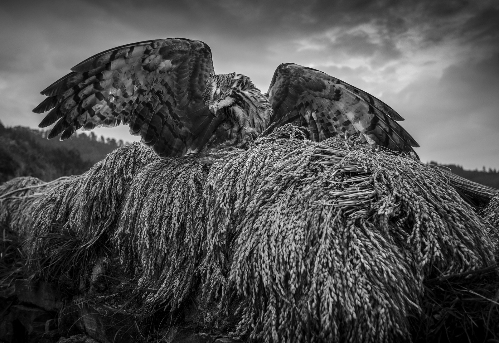 kuang-huimin-ancient-kam-rice-of-millennium-photography-of-china-(31).jpg