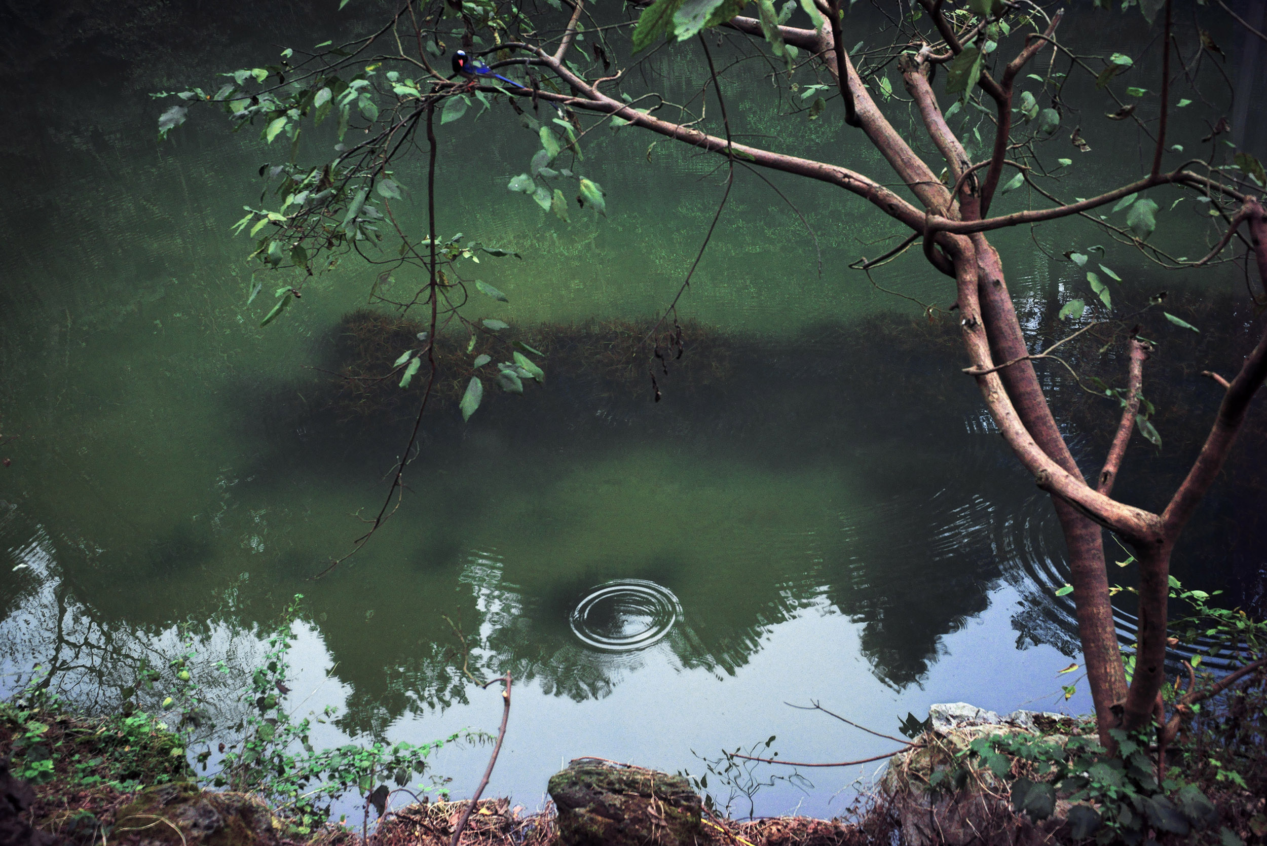 shen-wei-between-blossoms-photography-of-china-ripples.jpg