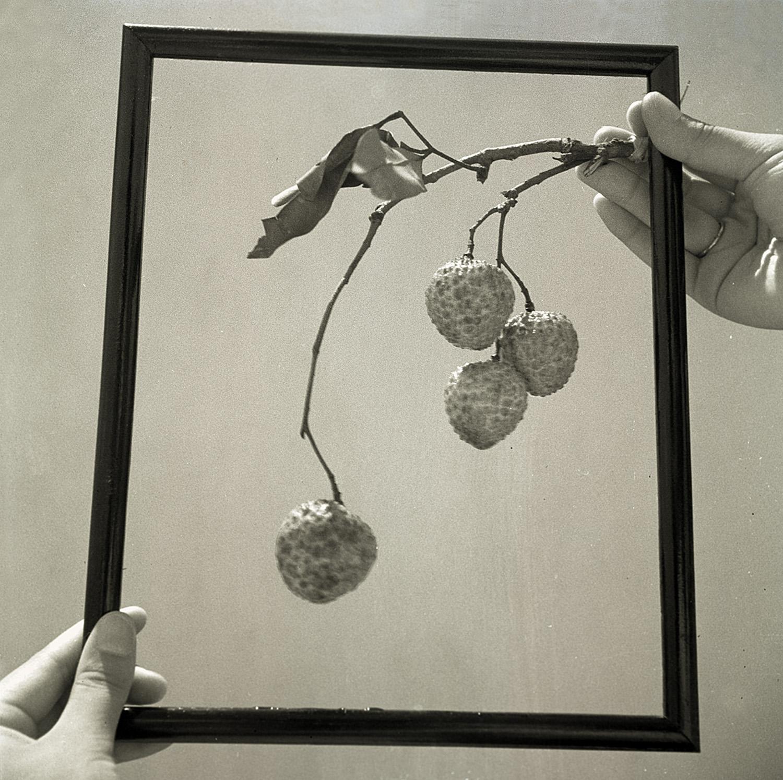 构图, Composition, 1930s / Courtesy of Jin Hua