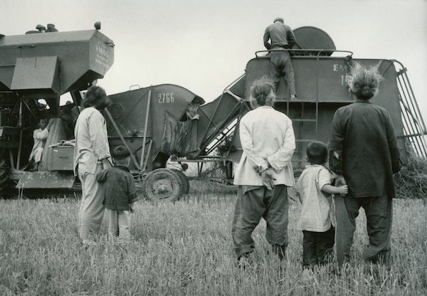 Bagging wheat, Hungarian harvester, state collective farm north of Peking, 1956 | Courtesy of Tom Hutchins Images Ltd., New Zealand