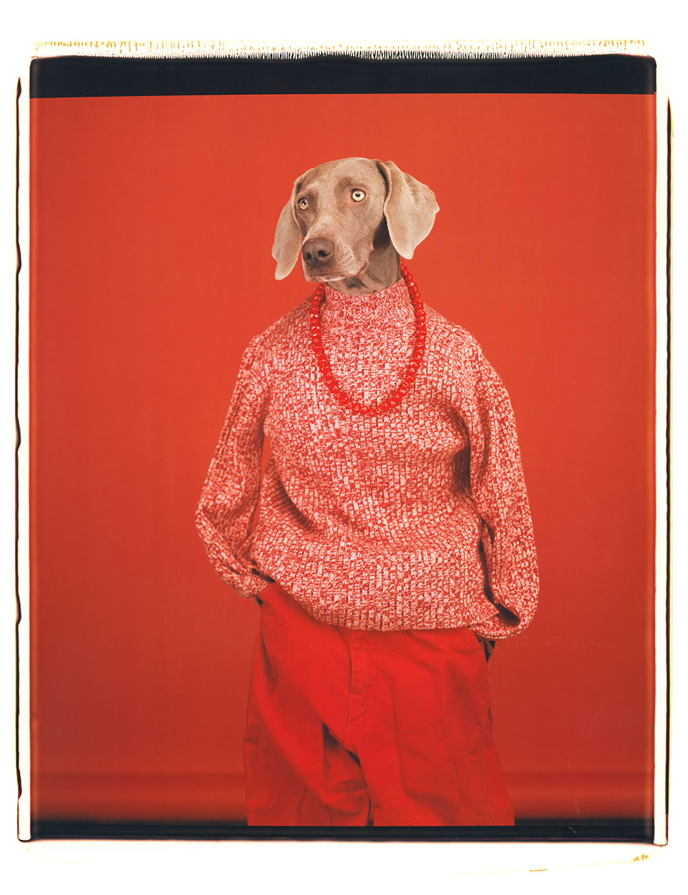 William Wegman,    Casual , 2002. Courtesy of the artist and Sperone Westwater Gallery  .