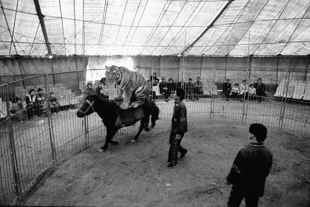 peng-xiangjie-the-wandering-tent-photography-of-china-6.jpg