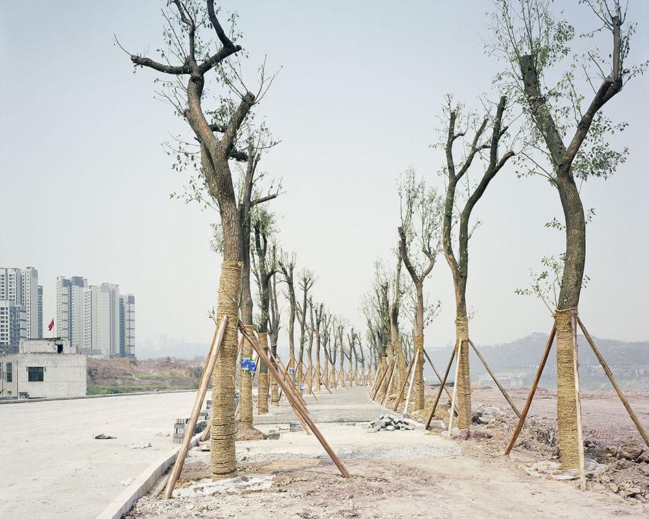 yan-wang-preston-forest-2010-2017-photography-of-china--1.jpg