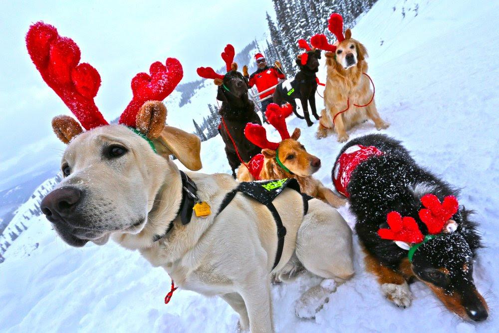 c.b.dog team.png