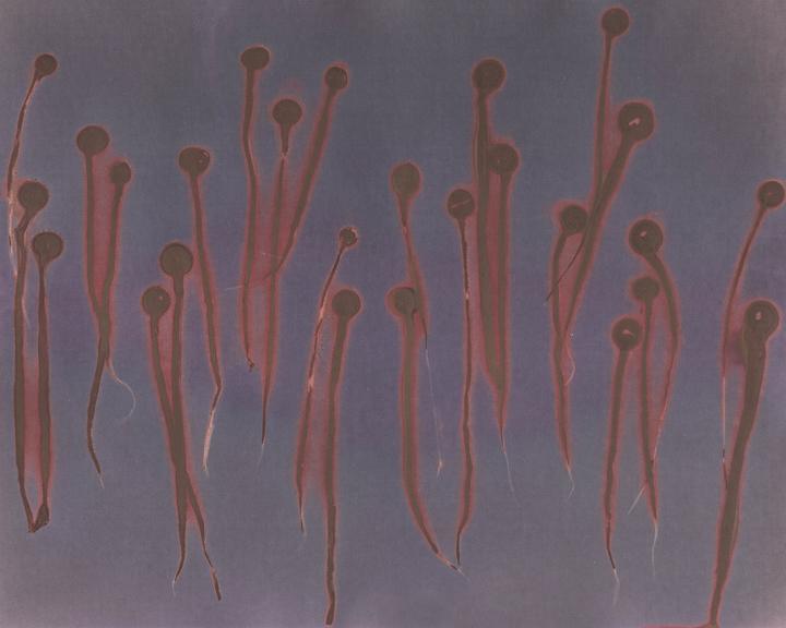 Jellyfish_Mushroom_web.jpg