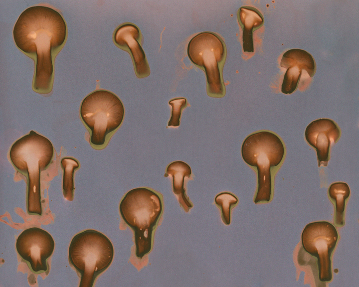 Round_Mushroom_web.jpg