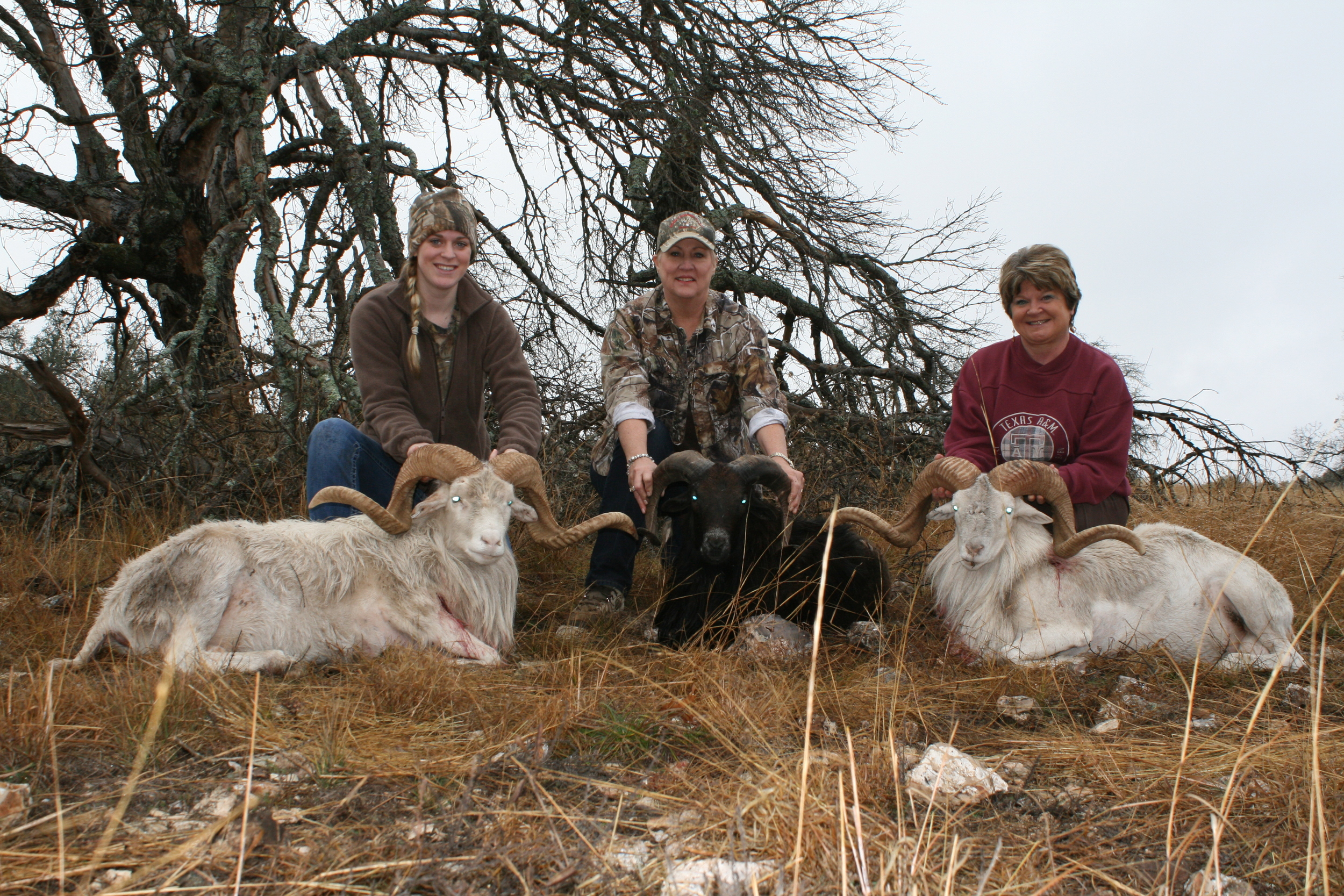 3 Amigos Sheep.JPG