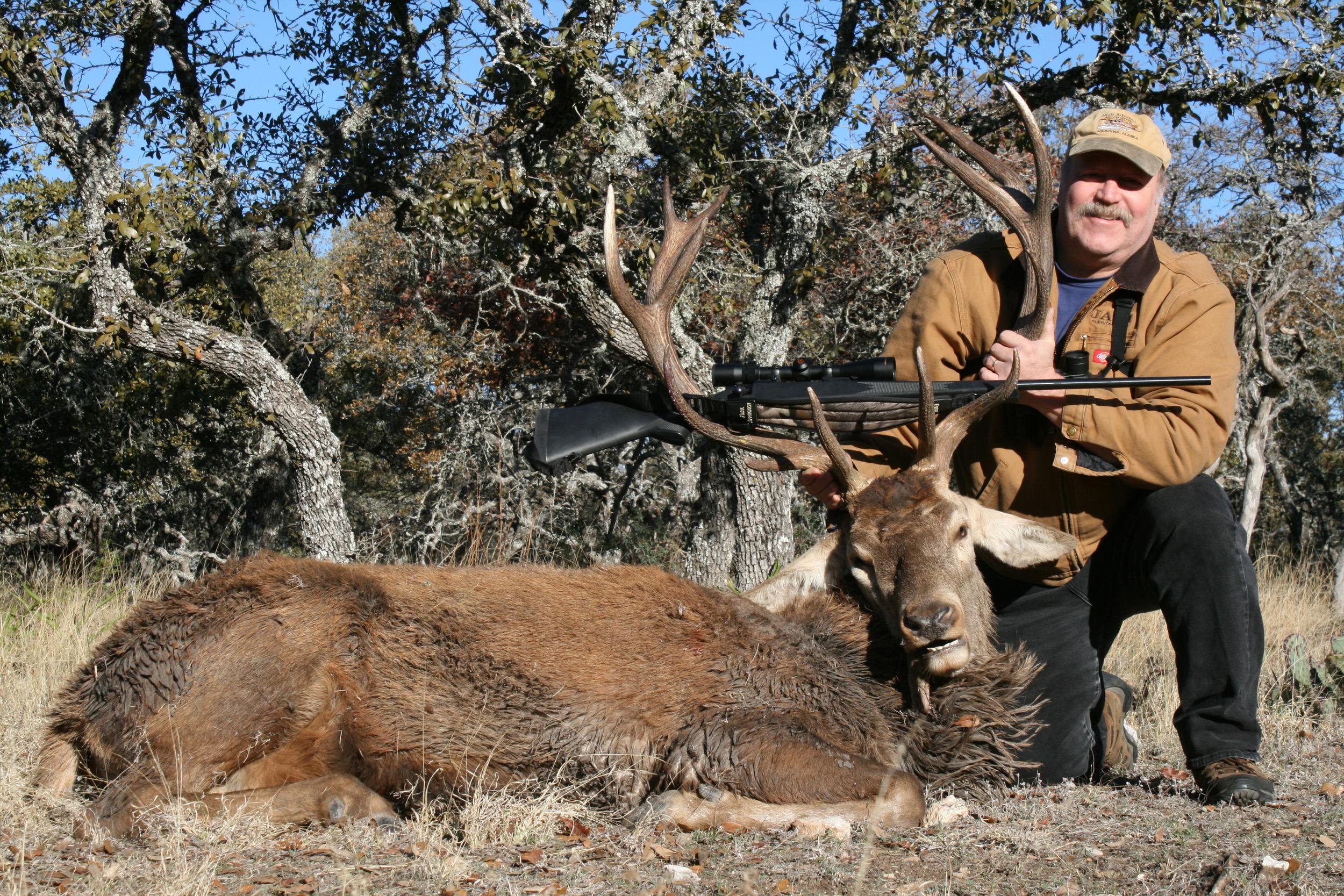 Trophy Red Deer
