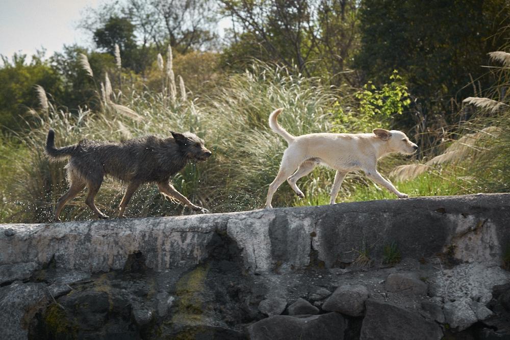 Fotografo de Bodas en Sierras Cordoba - DSC03334.jpg