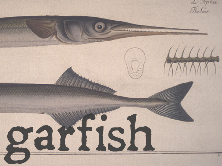 garfish.jpg