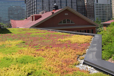 Friends Center-vegetated roof.jpg
