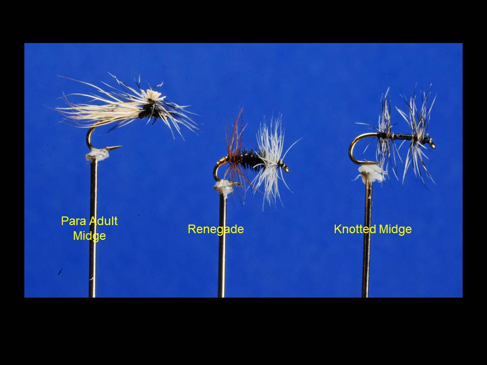 Adult Midges