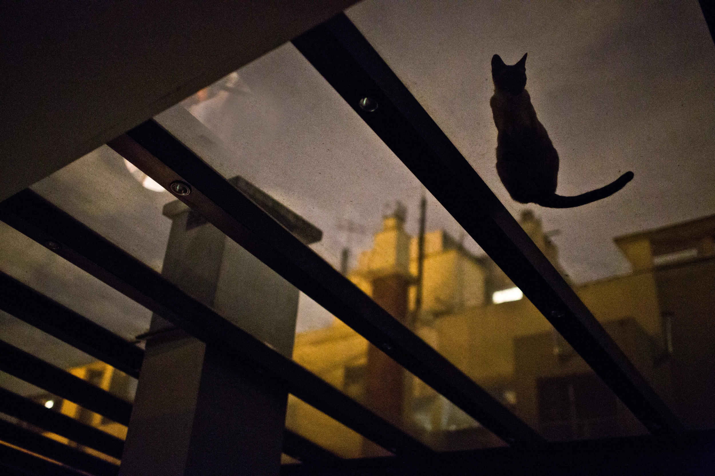 A cat sits on a glass roof in Buenos Aires, Argentin