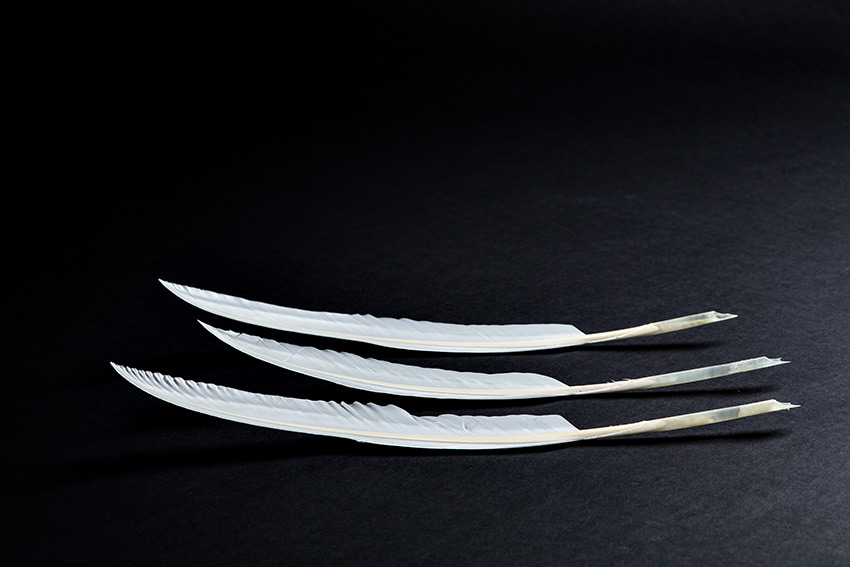 Feather Quill Pens used at Supreme Court, for Time