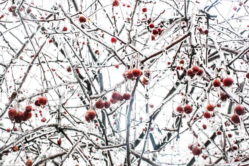 washington-dc-ice-storm-01.JPG