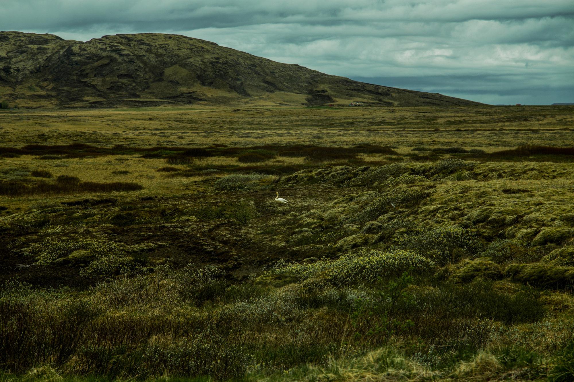 Iceland-04.jpg