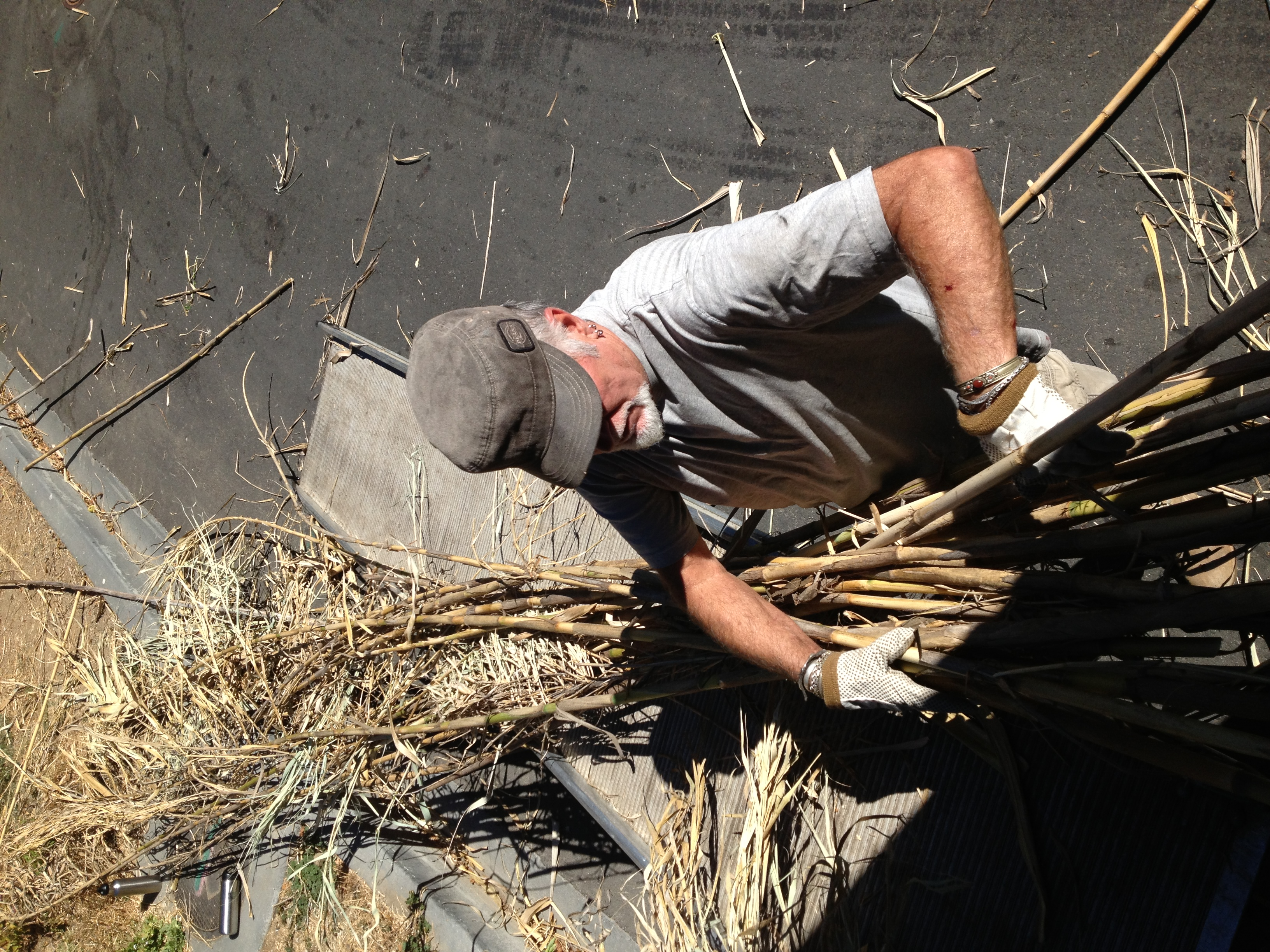 Don G. wrestling the Arundo Grass