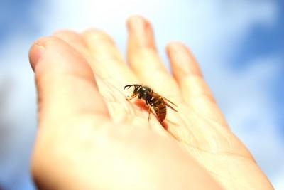 formicophilia-wasp-sting-fetish.jpg