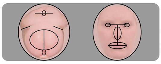 Human face or chimpanzee butt? Source: Kret, M. E., & Tomonaga, M. (2016). Getting to the Bottom of Face Processing. Species-Specific Inversion Effects for Faces and Behinds in Humans and Chimpanzees (Pan Troglodytes). PLOS ONE , 11 (11), e0165357.