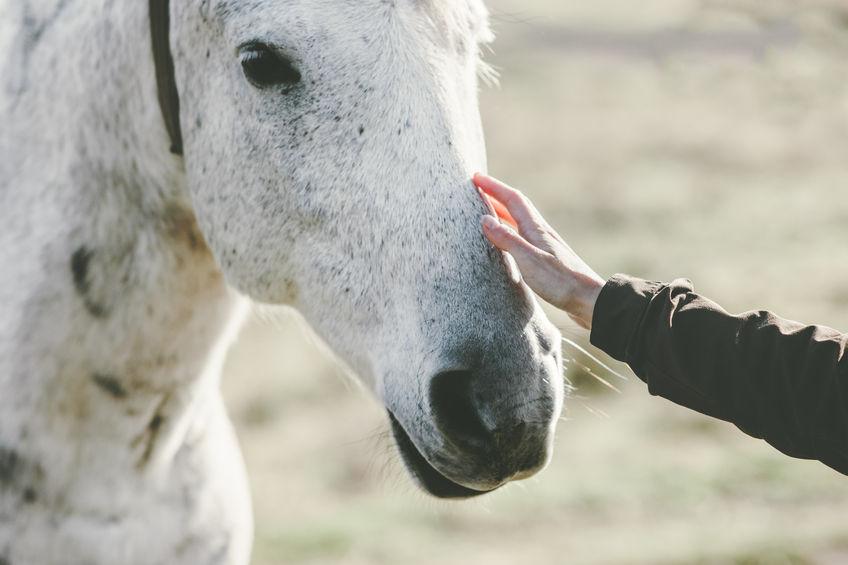 petting-white-horse.jpg