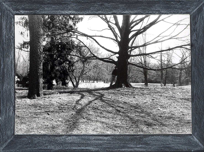 gords tree.jpg