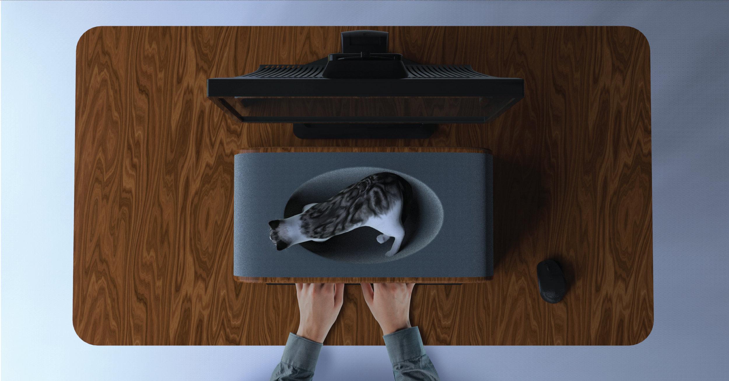 CatMatter-top.jpg