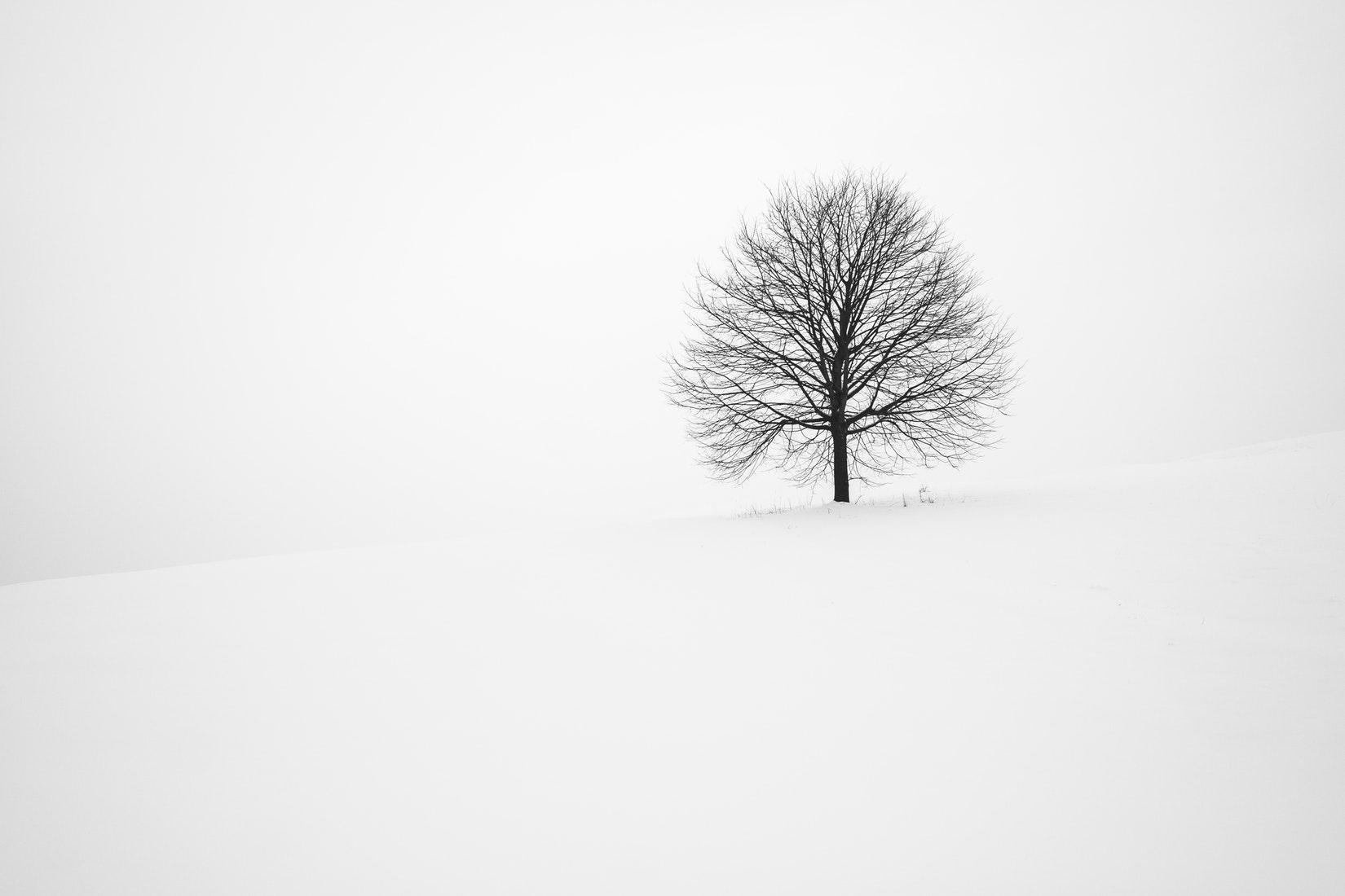 winter tree.jpeg