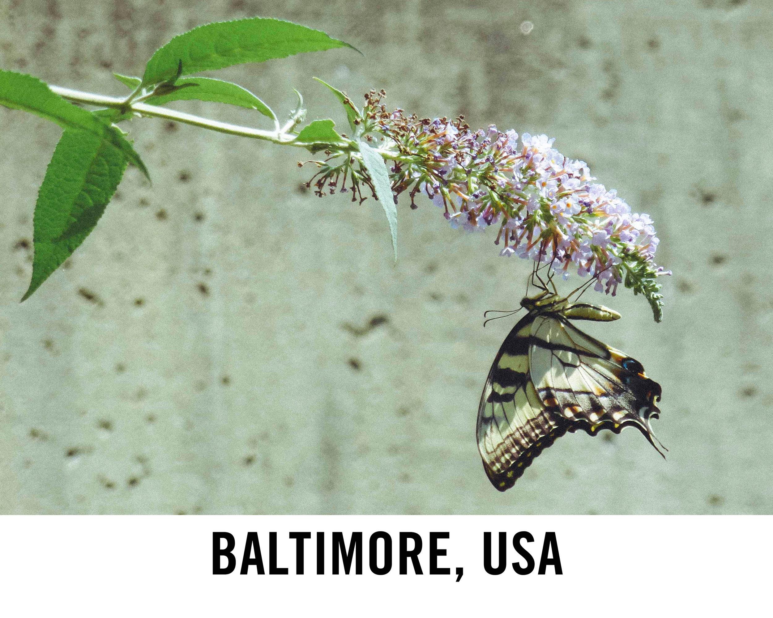Baltimore_WebGraphic2.jpg