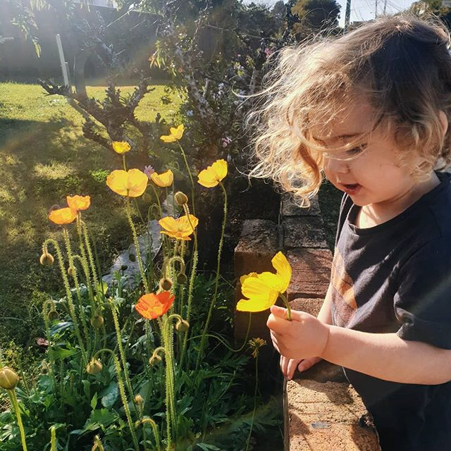 Taking time to smell the roses (poppies😉) with my little one before his baby sis arrives. Thanks so much for all your support this year. I'm now on leave but if you have any enquiries feel free to hit me up! Much love X  #BowdenJamesMoir