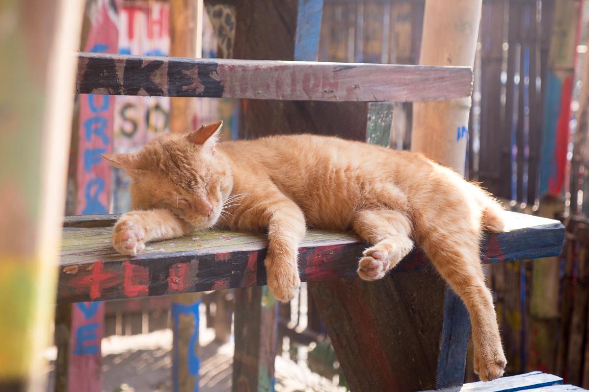 Garfield the Liw-liwa cat has a snooze at The Circle Hostel