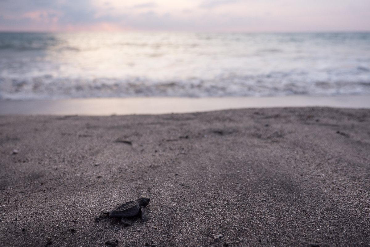 Go forth little baby turtle