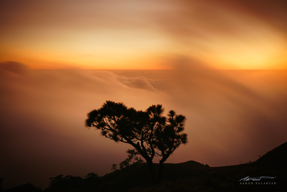 Lone Tree at Dusk, Mt. Pulag