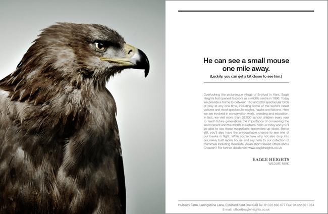 BIRDS_ALT_ADS3.jpg