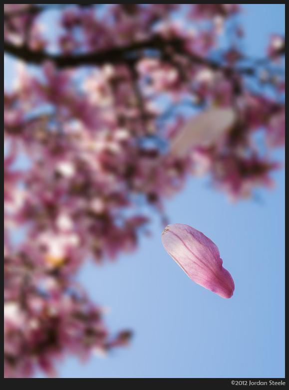 falling_petal.jpg