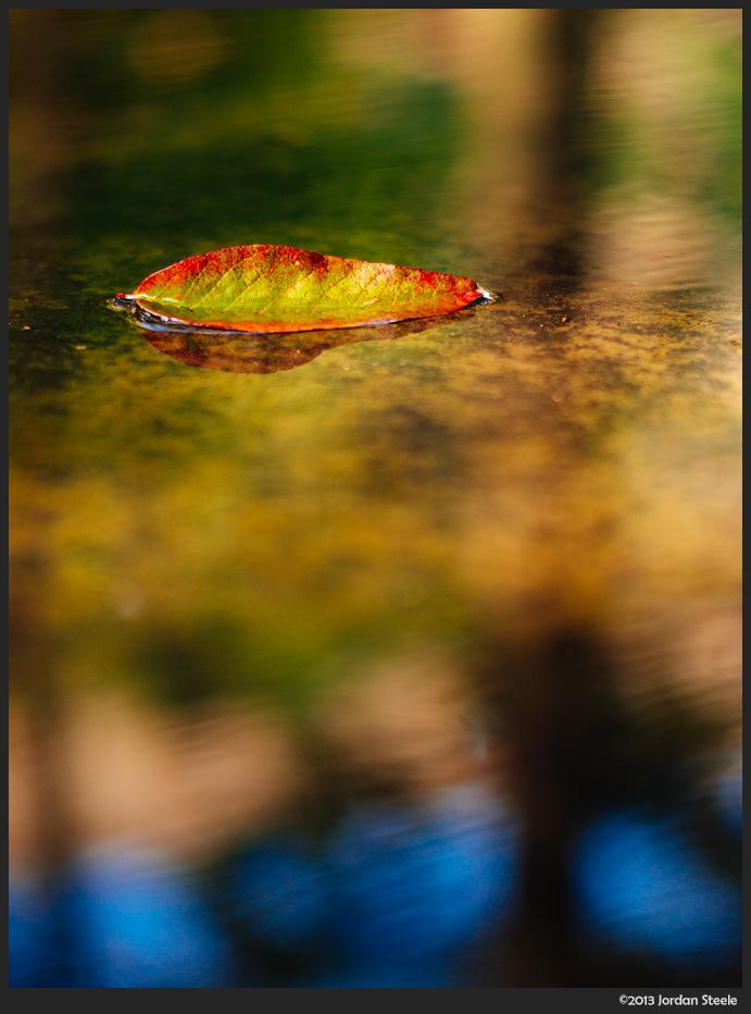 leaf_water.jpg