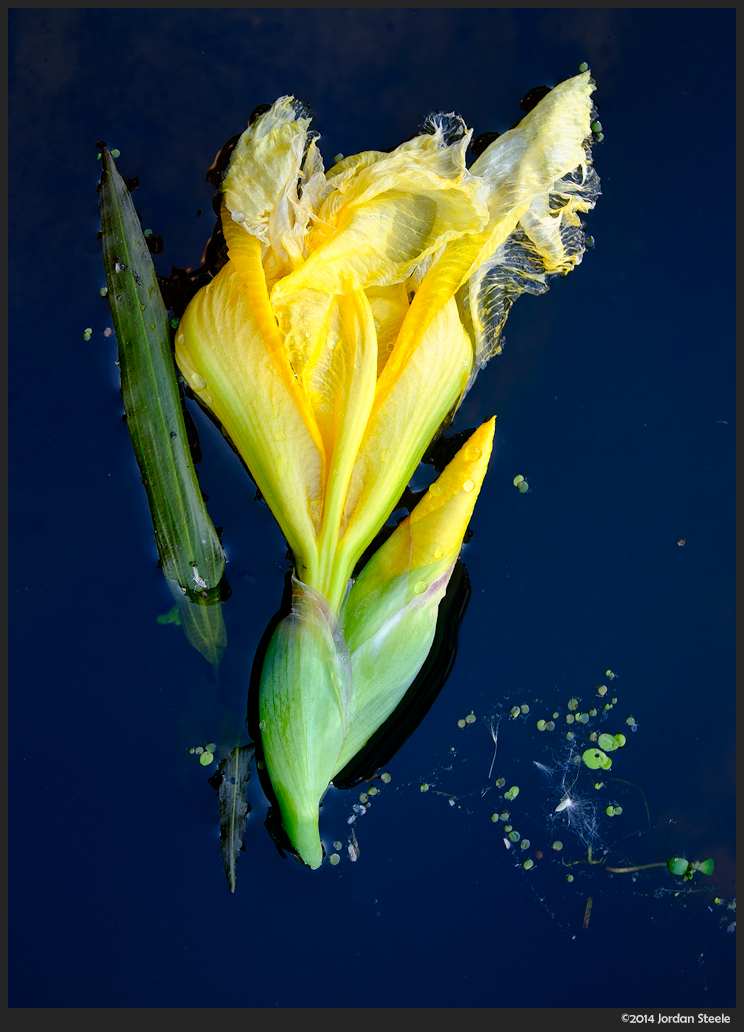 water_flower.jpg