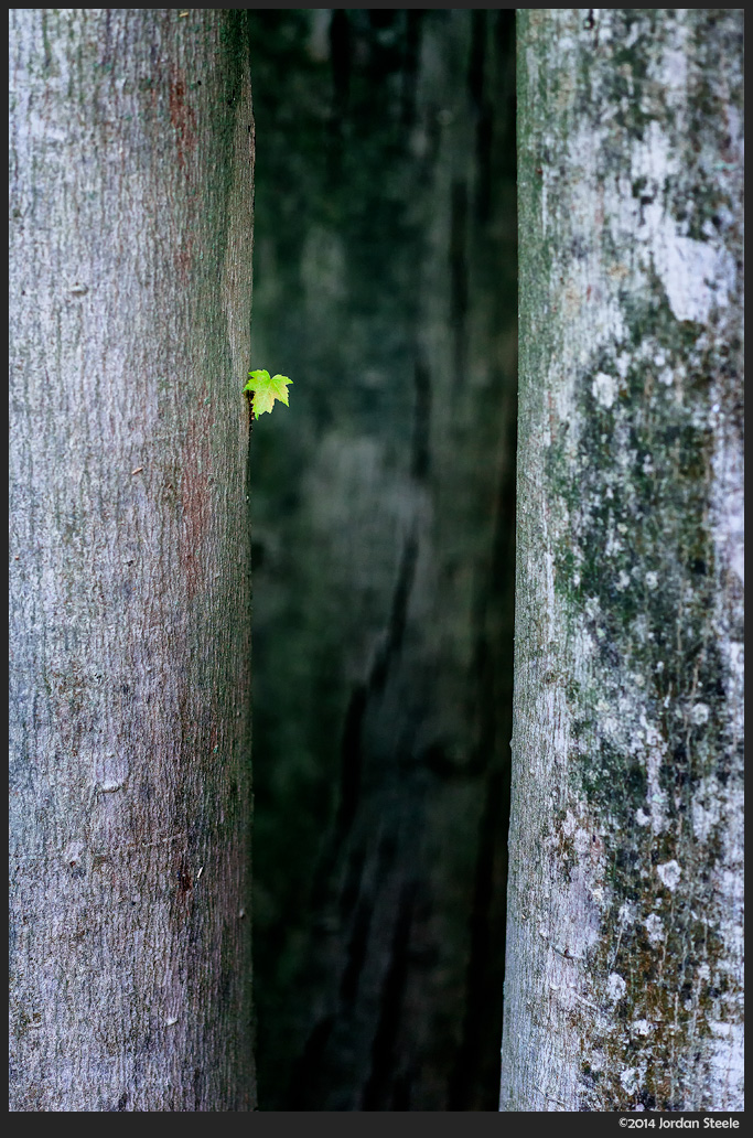 tiny_leaf.jpg