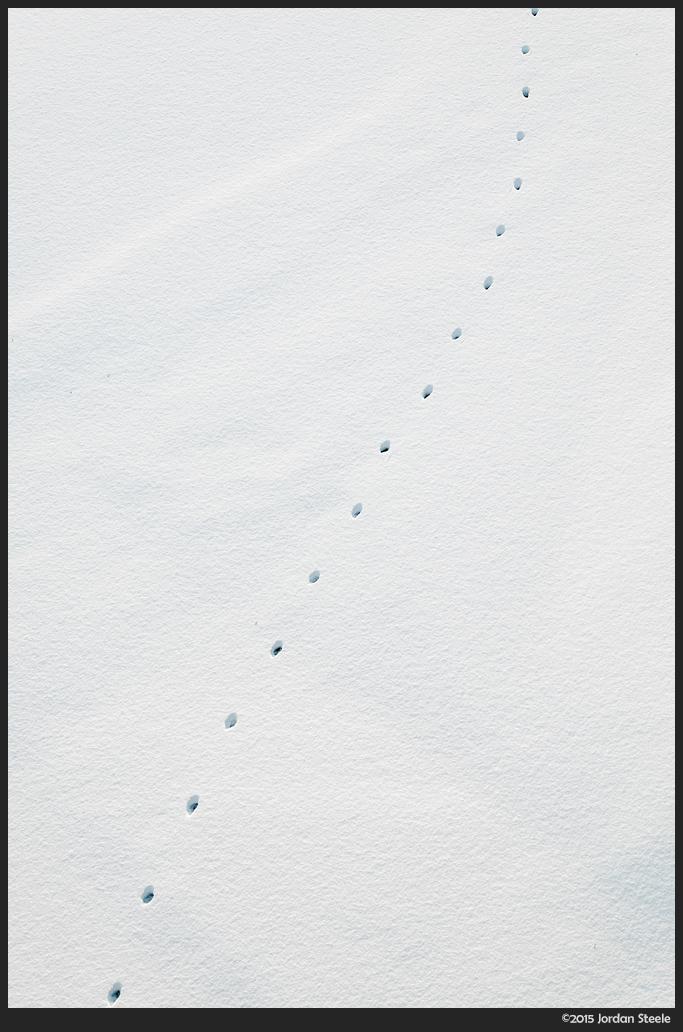 snow_tracks.jpg