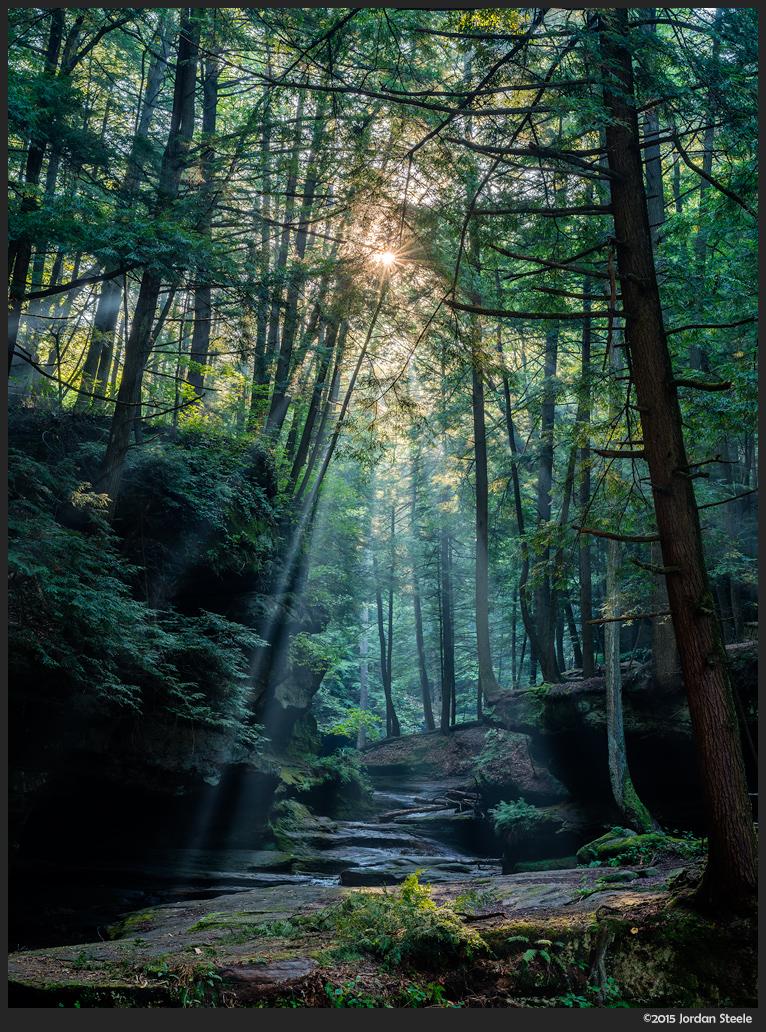 sunrise_forest.jpg