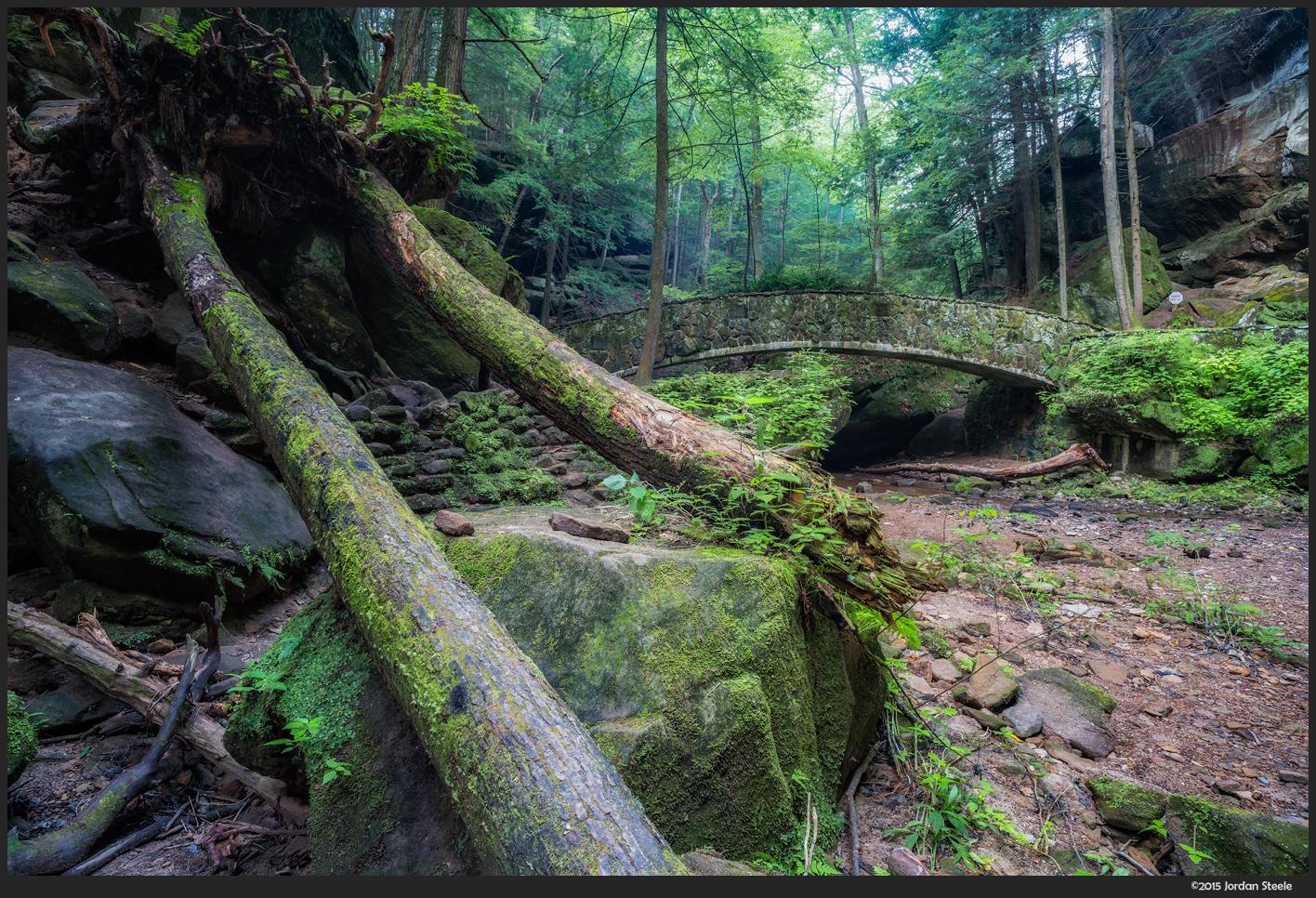 fallen_trees.jpg