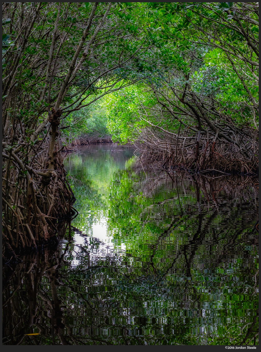 mangrove_tunnel.jpg