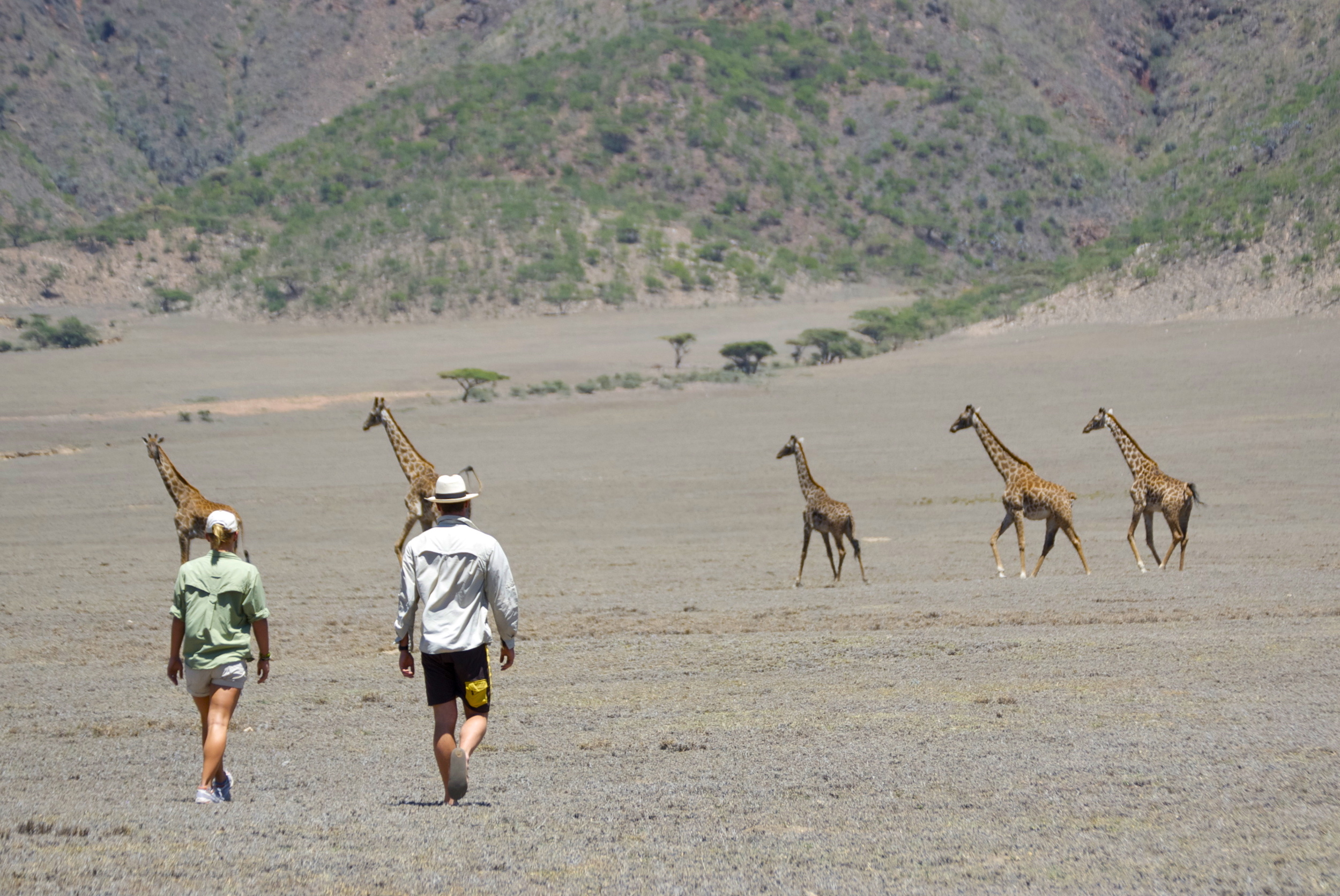 Walking with Giraffes.jpg