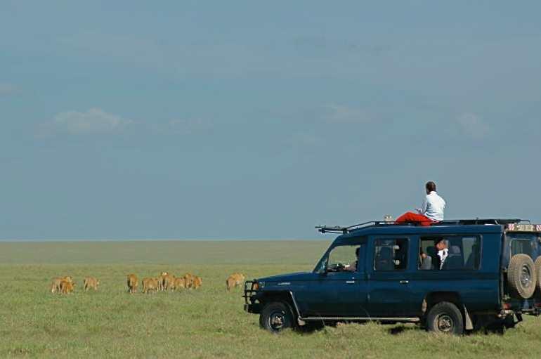 Vehicle & Lion pride.jpeg