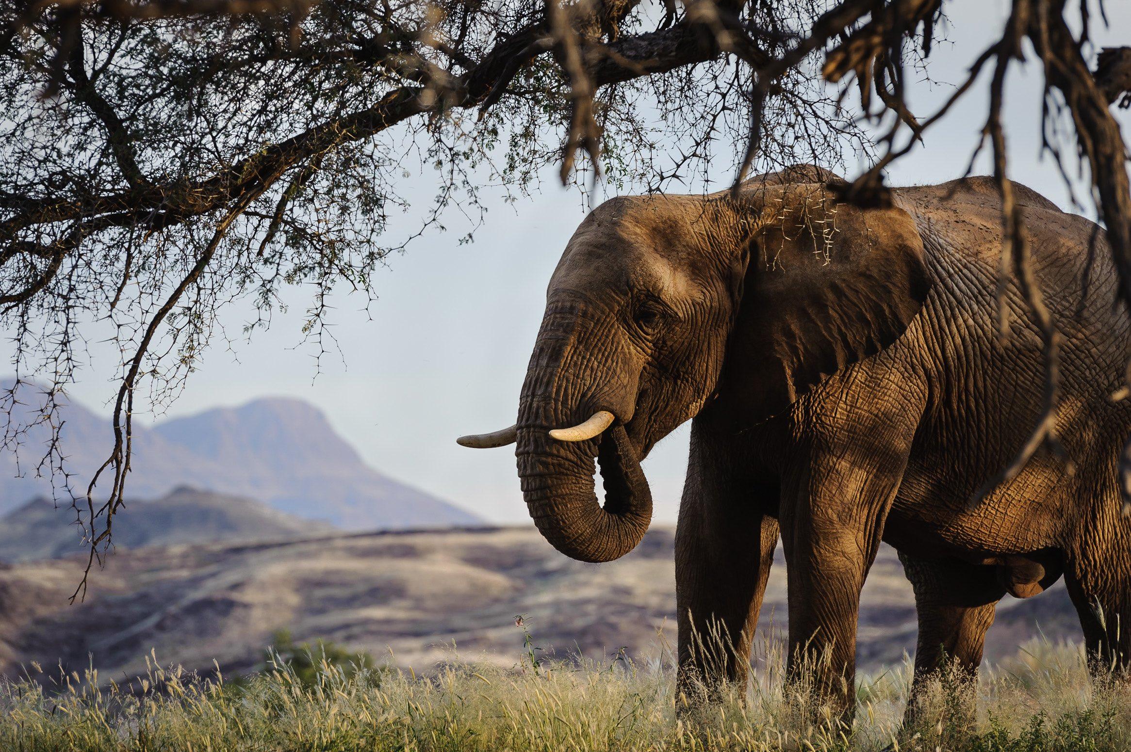 Namibia_elephant.jpg