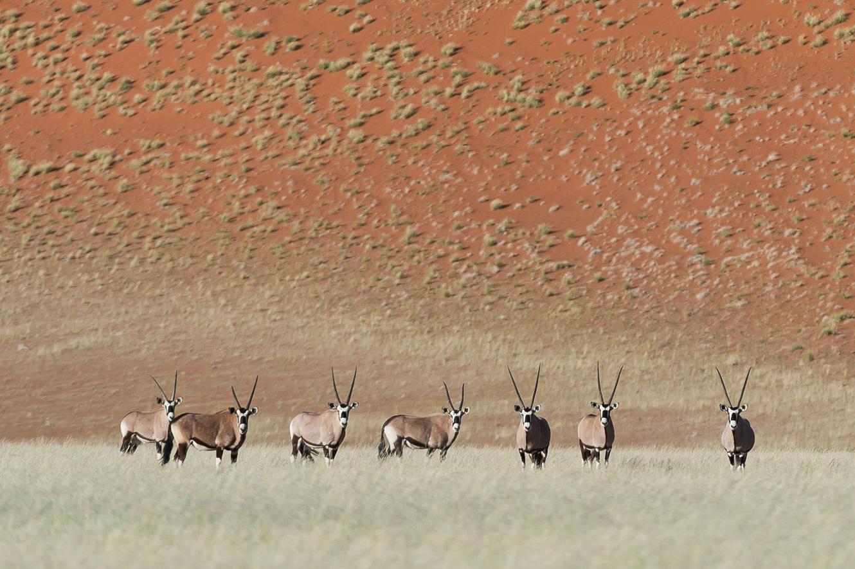 Nambia_oryx.jpg