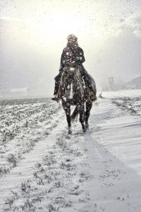 snowrider.jpg