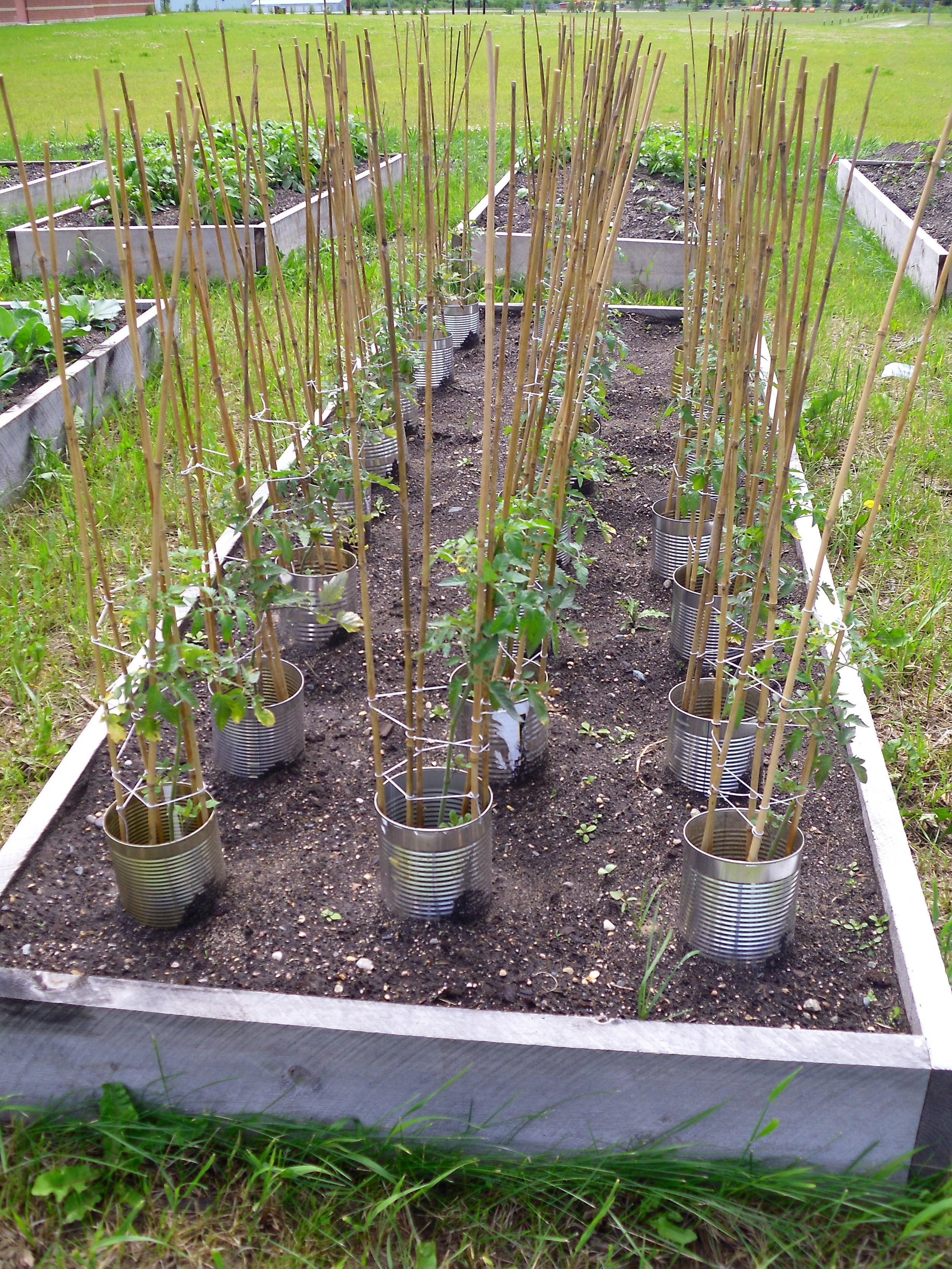 school garden 2011 009.jpg