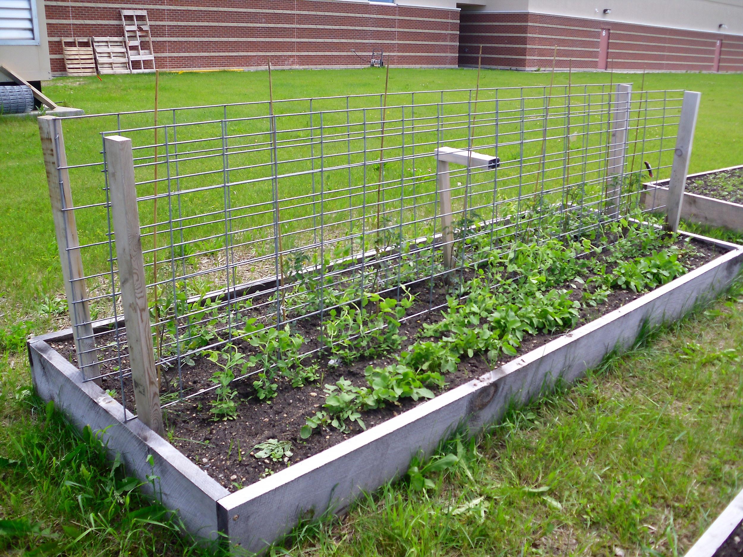 school garden 2011 010.jpg